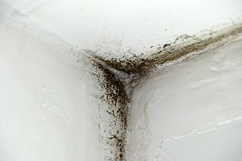 How Do I Know If Have A Mold Problem In My Home